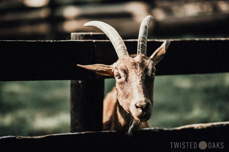 twisted-oaks-studio-maggie-jordan-farm-wedding-0030